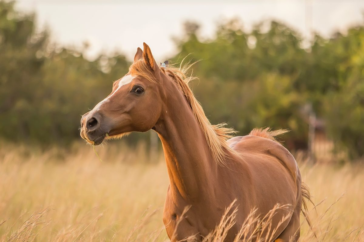 Today's investor needs a star manager like they need a horse