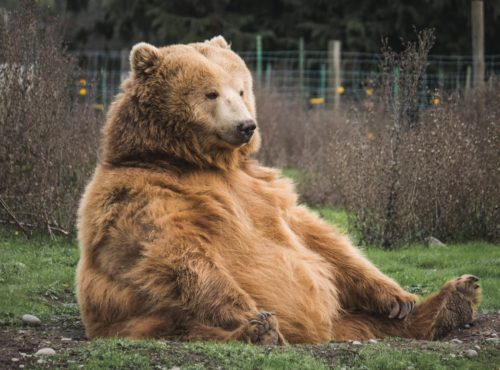 Bear markets are part of a normal market cycle
