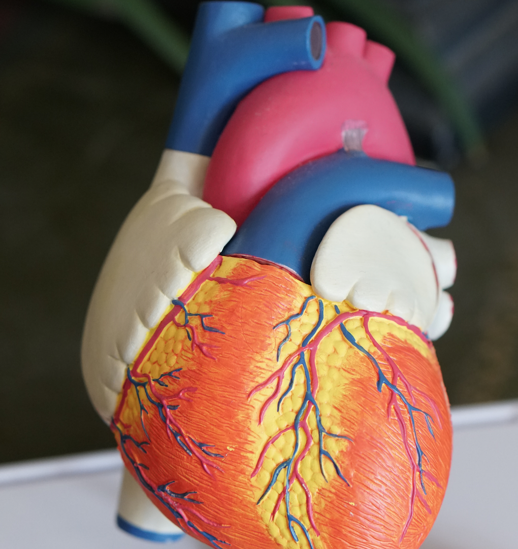 Two-and-a-half billion heartbeats
