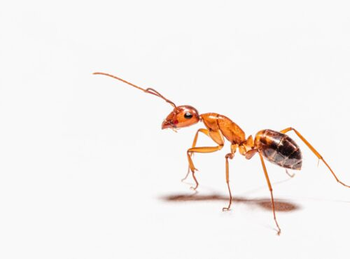 The drawbacks with ANTs (active non-transparent ETFs)