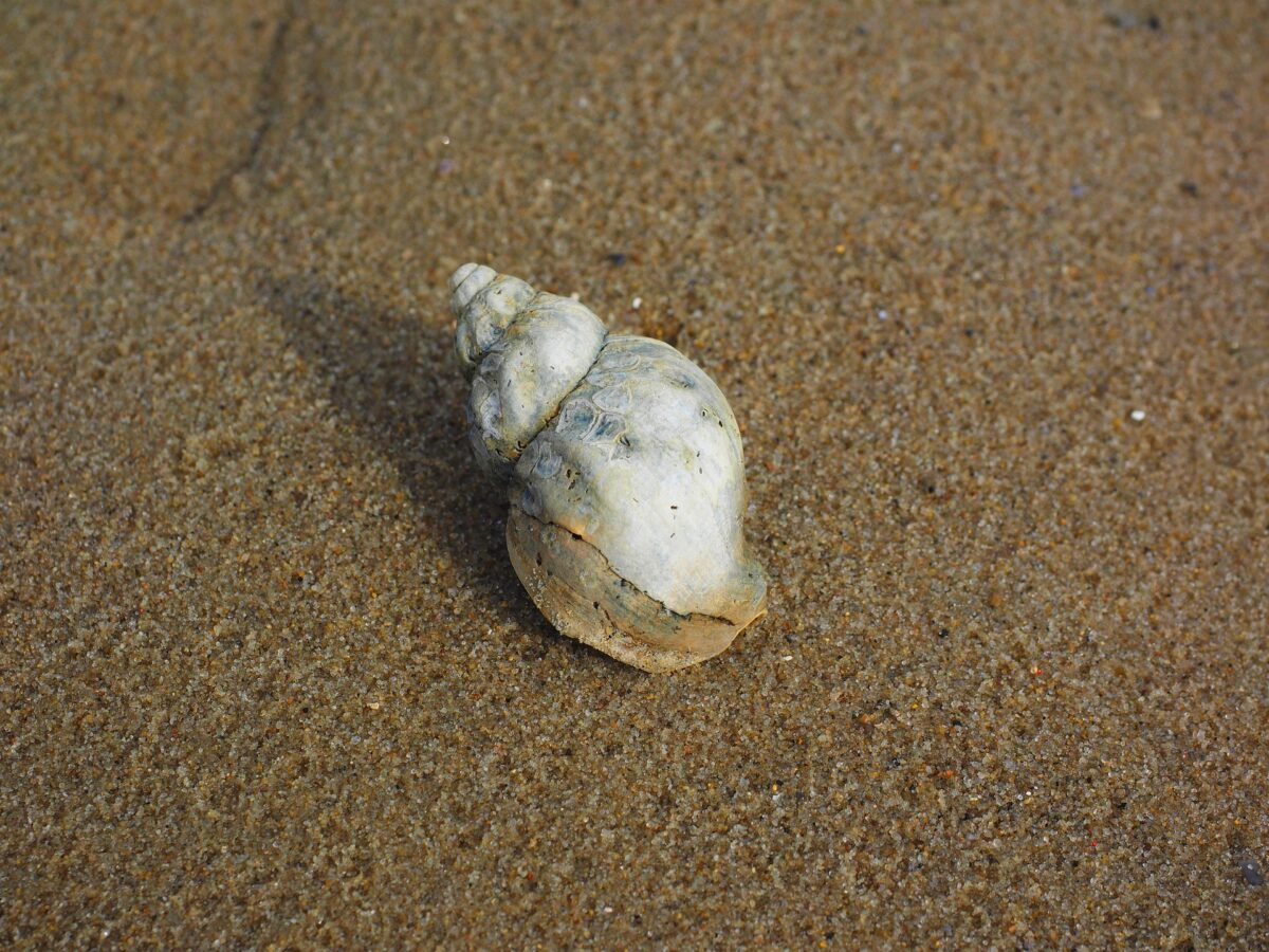 Is there a whelk in your fund portfolio?